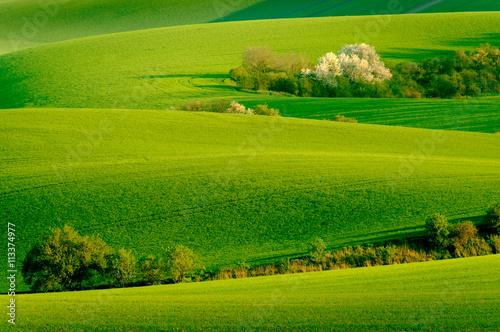 Foto op Plexiglas Groene Green wavy hills in South Moravia