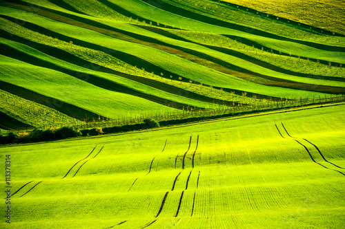 In de dag Lime groen Green wavy hills in South Moravia