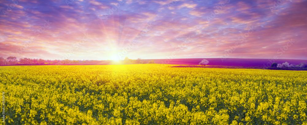 Fototapety, obrazy: Rapeseed field in spring