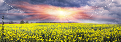 Poster Jaune Thunderstorm on rapeseed field