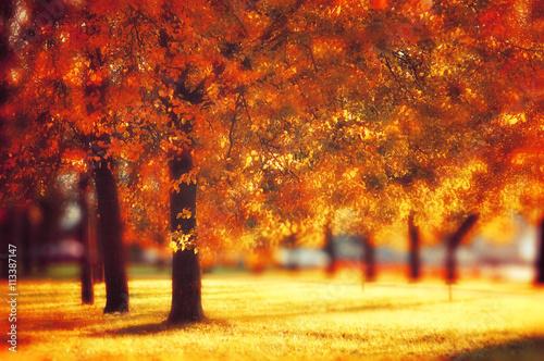 Keuken foto achterwand Rood traf. Autumn park in nice sunny weather - autumn landscape