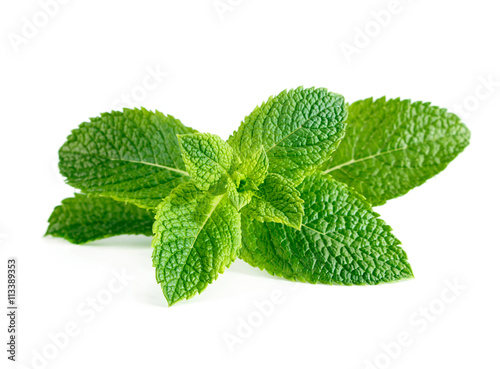 Obraz Fresh raw mint leaves isolated on white background - fototapety do salonu