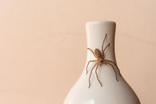 Spider On The Mouth Of The Bottle.