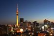 Auckland city skyline at dusk