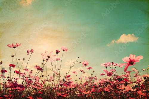 Vintage landscape nature background of beautiful cosmos flower field on sky with sunlight плакат