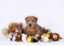 Puppy Sitting Between Plush Baby Toys