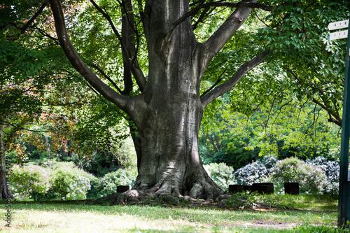 Fotografie, Obraz  大木の幹 / Big tree