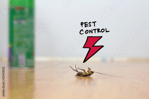 cockroach on floor , pest control concept