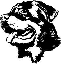 Rottweiler Head Drawing