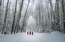 Rear View Of Hikers Walking Through Snow Covered Forest