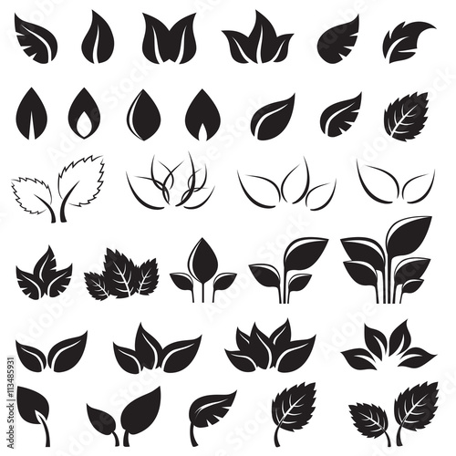 Set of black leaves design elements isolated Plakát