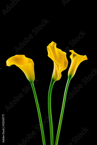 Wall Murals Flower shop Bunch of callas on black background