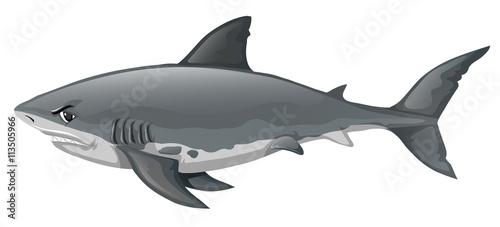 Fotografía Wild shark on white background