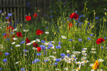 Blooming Wild Flowers On The Meadow At Summertime