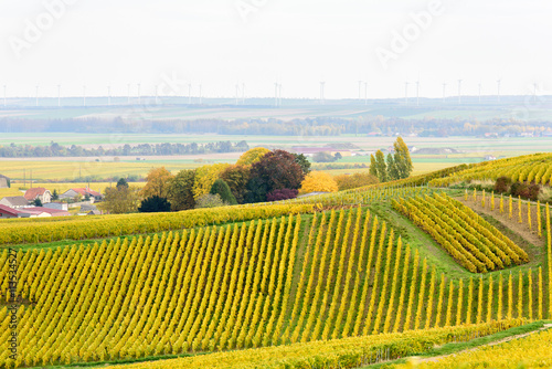 Fototapety, obrazy: Champagne wine fields during autumn