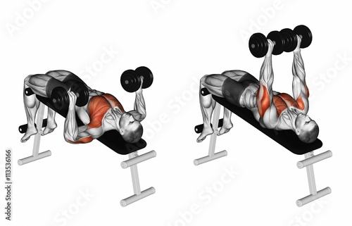 Decline Dumbbell Bench Press. Exercising for bodybuilding Target muscles are marked in red. Initial and final steps. 3D illustration: comprar esta ilustración de stock y explorar ilustraciones similares en Adobe Stock |