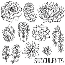 Hand Drawn Succulent Plants Ve...