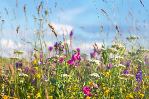 Wild flowers meadow with sky in background - 113547186
