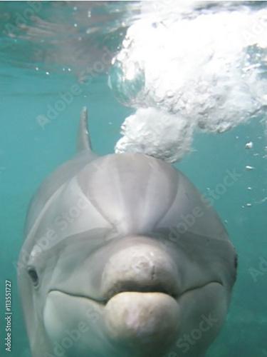 Photo  Curious Dolphin