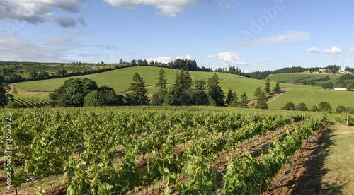 Papiers peints Vignoble Springtime in the Grape Fields of Western Oregon