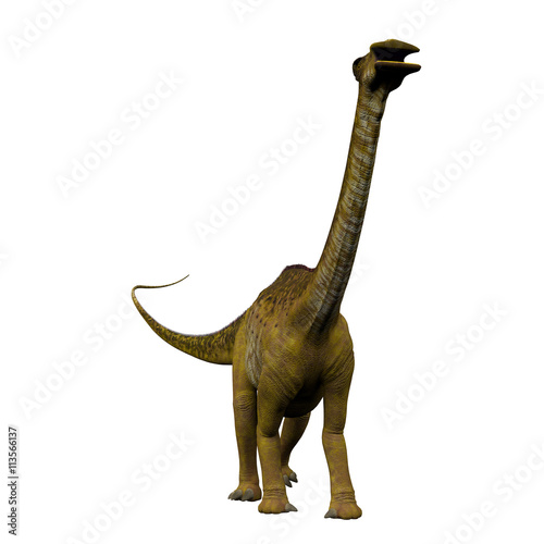 Photo  Nigersaurus on White - Nigersaurus was a sauropod herbivorous dinosaur that lived in the Republic of Niger, Africa during the Cretaceous Period