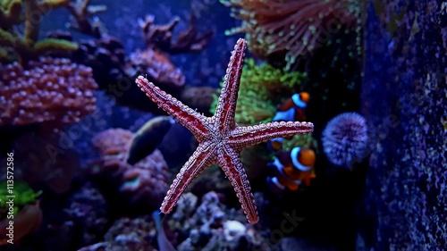Fotografie, Tablou  Aquarium scene with Starfish