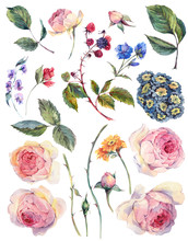 Set Vintage Watercolor Elements Of English Roses