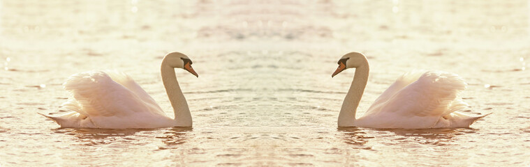 Beautiful swan website banner with copy space