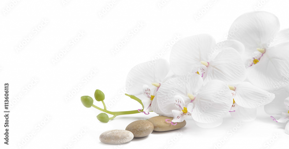Fototapety, obrazy: Spa white orchid with massage stones