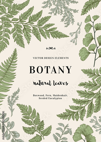 Fotografía  Botanical illustration with leaves.
