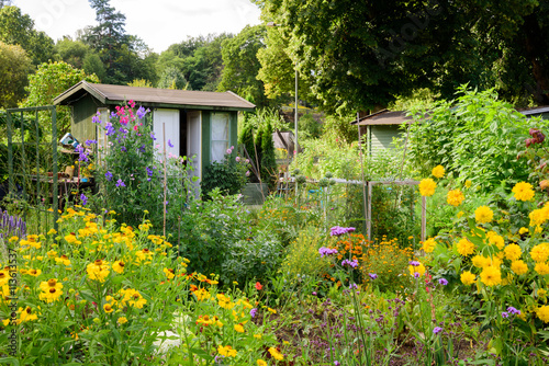 Photo Allotment flower garden