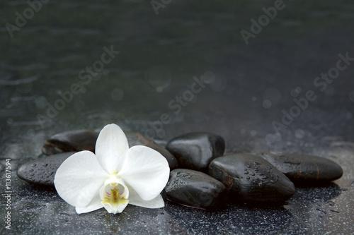 bialej-orchidei-i-czerni-kamieni-zamkniety-up