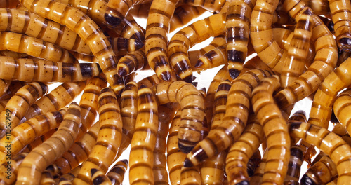 Fotografía  Zophobas morio (worms) close up
