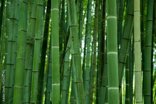 Poster de jardin Bambou bamboo grove, bamboo forest at Arashiyama, Kyoto, Japan