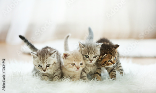 Fotobehang Kat Small cute kittens on carpet
