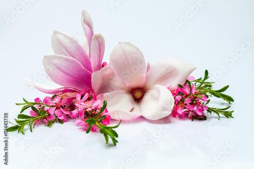 Plakat Piękna gałązka kwitnąca i magnolia