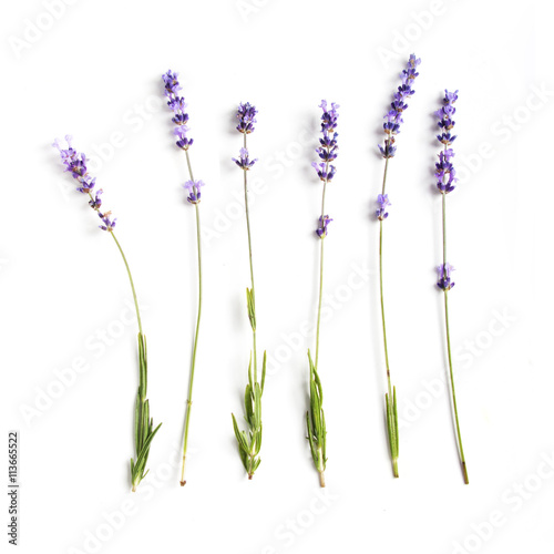 Photo  lavender flowers set