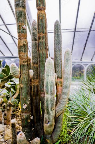 Foto op Canvas Cactus gardens