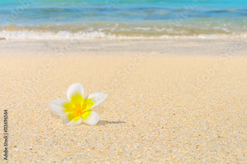 Wall Murals Plumeria Frangipani flower on a sandy beach with the sea shore in the background