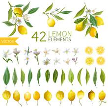 Vintage Lemons, Flowers And Le...