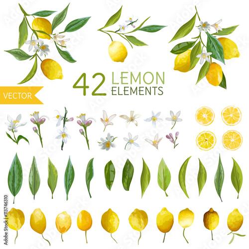 Vintage Lemons, Flowers and Leaves. Lemon Bouquetes. Watercolor Fototapete