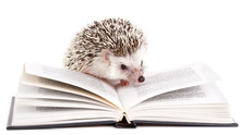 African Hedgehog And Book