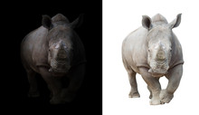 White Rhinoceros In Dark  And ...
