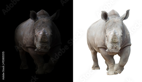 white rhinoceros in dark  and white background