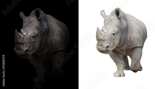 Naklejka premium white rhinoceros in dark and white background