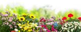 Fototapeta Kwiaty - Flowers in garden