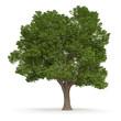 Drzewo_1