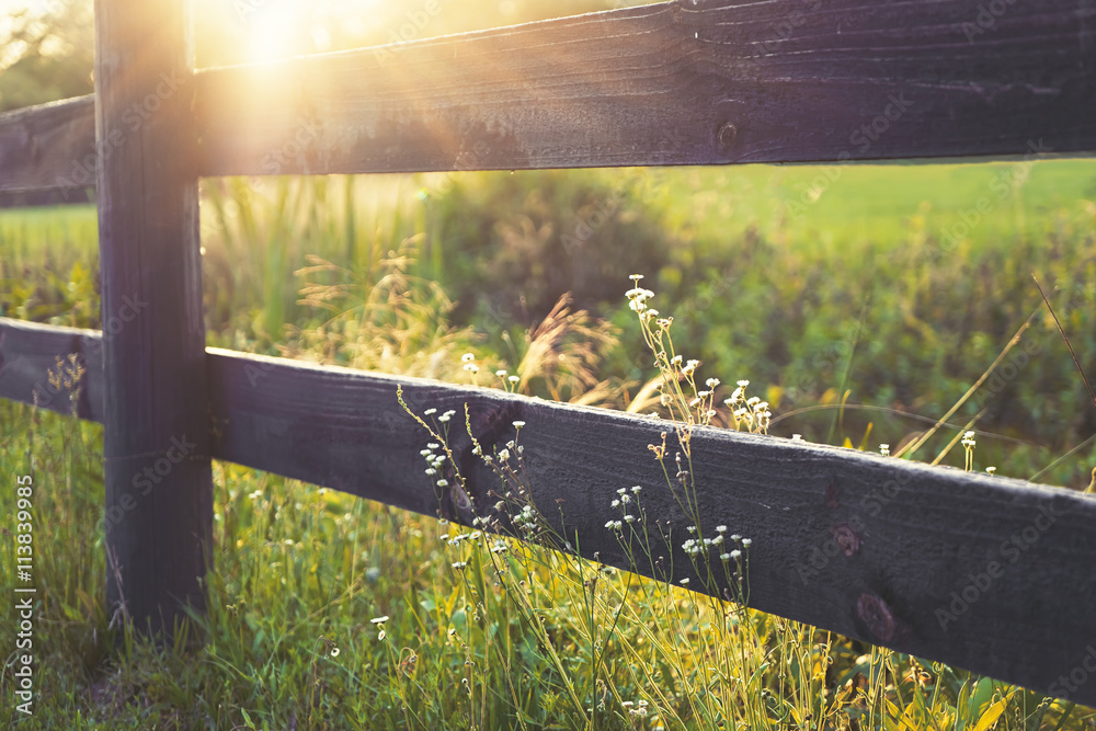 Fototapeta Sunrays on rural black country fence with lesser prairie fleabane little white flowers growing wild on both sides in peaceful romantic setting