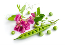 Fresh Green Peas With Blossom