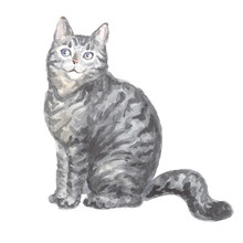 Sitting Silver Tabby Cat. Image Of A Thoroughbred Cat. Watercolor Painting